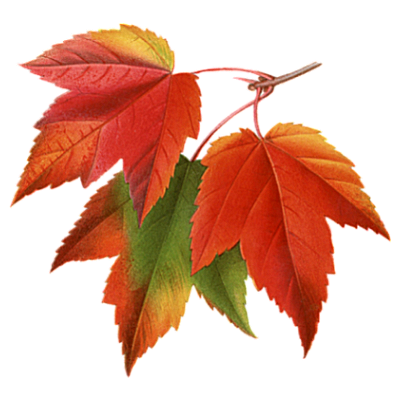 autumn-fall-leaves-pictures-collage-png